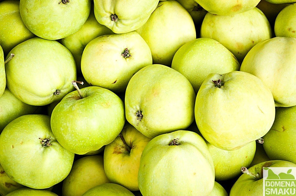 Kiszone jablka 2