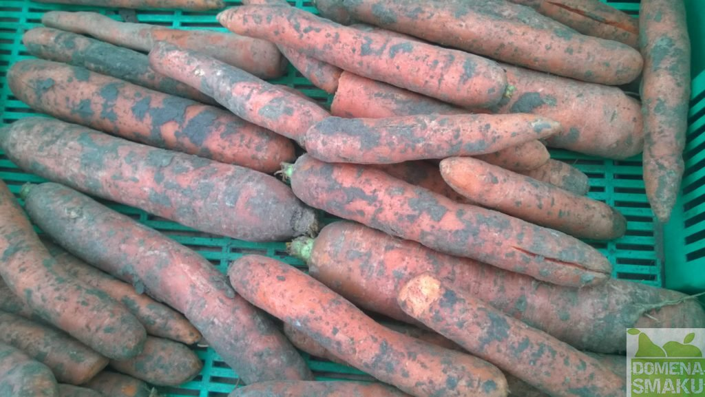 warzywa na kole 5
