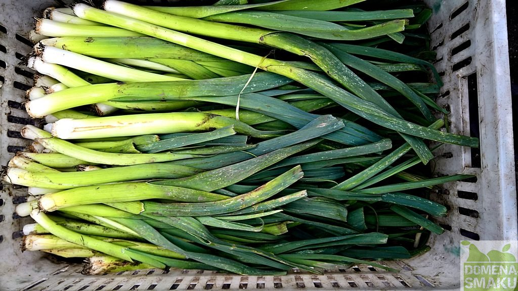 warzywa zielonka dionizy 1